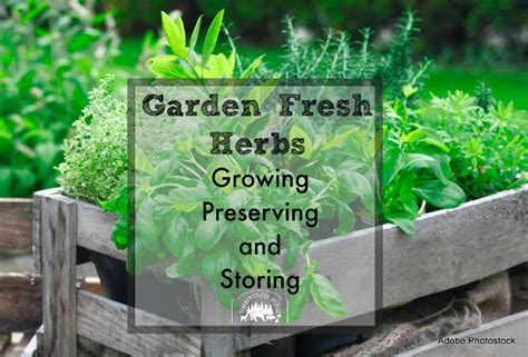 smart herb garden provides fresh herbs at home growing preserving and storing garden fresh herbs