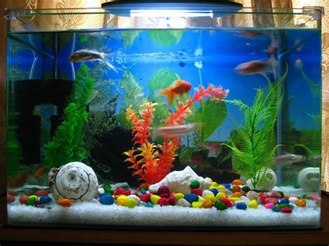 playful and contemporary fish tank decoist