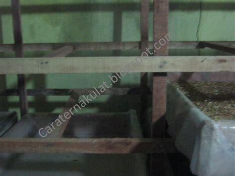Bibit Ulat Jerman cara ternak ulat membuat kandang ulat bag 2