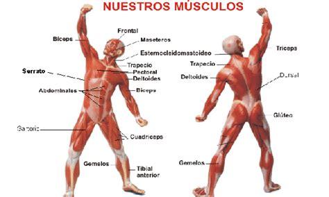 clasificacion de las cadenas musculares pdf m 250 sculos