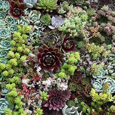 giardino piante giardino di piante grasse piante grasse