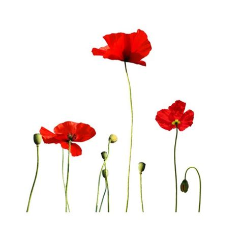 Poppy Wall Sticker Giant Poppies Wall Decal Set Wilsongraphics Housewares