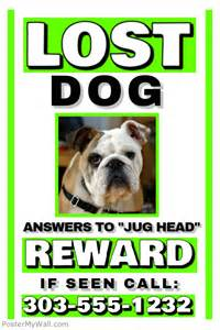 lost pet flyer template free lost template postermywall