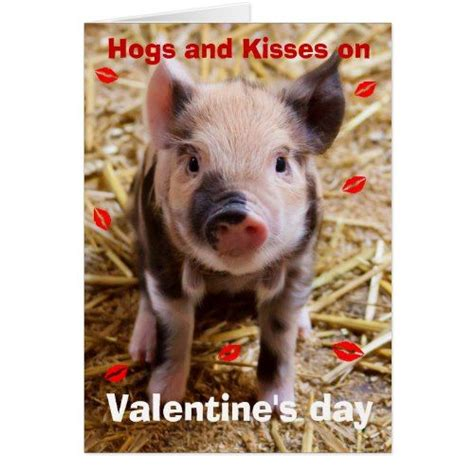 happy valentines day funny piglet holiday card zazzle