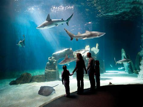 quanto costa l ingresso all acquario di genova guida turistica acquario di genova viaggiamo