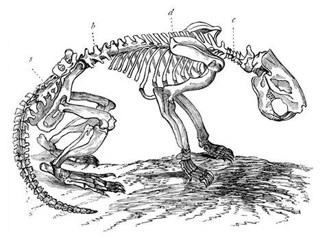 beaver skeleton clipart