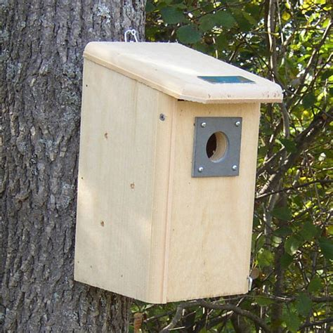 finch bird houses goldfinch birdhouse plans free