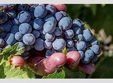Wein und Gesundheit - Fattoria La Vialla Fattoria La Vialla