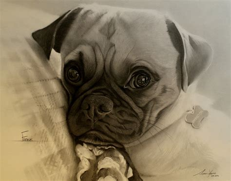 king charles pug commission pug king charles caviller x frank by captured in pencil on deviantart