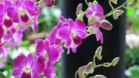 significato dei fiori orchidea il significato dei fiori
