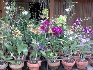 Tanaman Bunga Aunthurium Jemanii 1 orchid shop