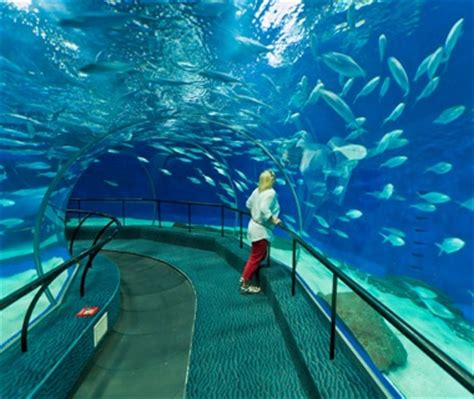 underwater malta why work in an office books shanghai aquarium shanghai coolest underwater