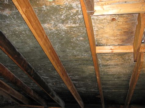 Black Mold In Attic - attic mold remediation experts toxic black mold removal ma