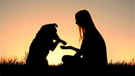 dogs and humans how science knows dogs really do make us feel better anguspost