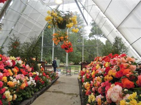 ballarat botanical gardens begonias greenhouse picture of ballarat botanical