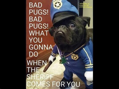 bad pug bad pugs bad pugs what you gonna do when the sheriff comes for you come check this