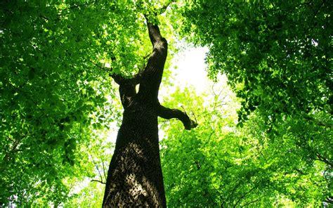 imagenes verdes hd un arbol y sus hojas verdes hd 1920x1200 imagenes