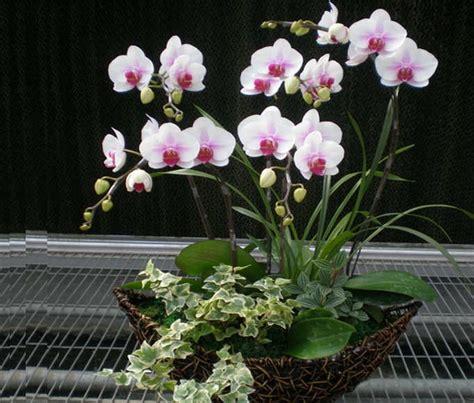 Pot Untuk Anggrek mudahnya cara merawat bunga anggrek tanaman hias