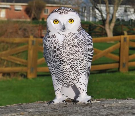 Papermau Barn Owl Miniature Paper - 237 best images about papercrafts 3d paper models on