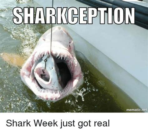 shark meme 25 best memes about shark week shark week memes