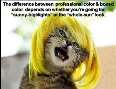 Hair Jokes On Pinterest Hair Humor Lol And So Funny | hair humor lol pinterest