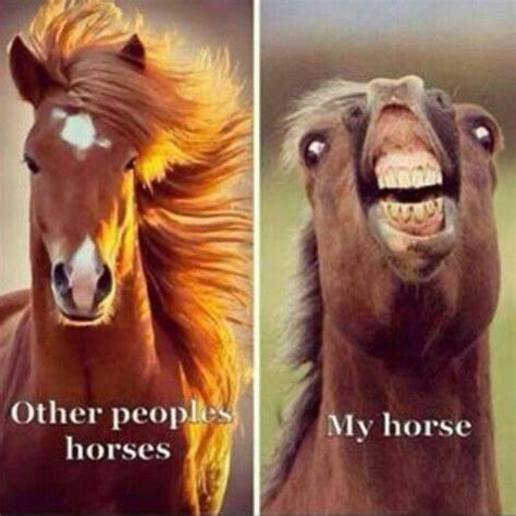 Horse Birthday Meme - 25 best ideas about funny horse memes on pinterest