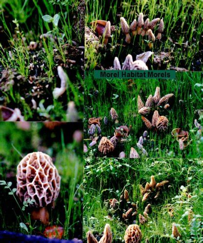 backyard mushroom growing morel habitat kit backyard morel mushroom growing kit