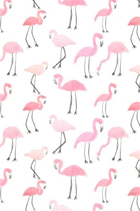 flamingo wallpaper iphone 5 flamingo iphone wallpaper fondo de pantalla image