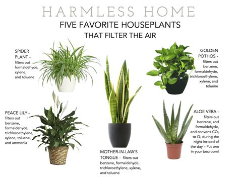 good house plants going green