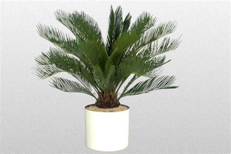 piante ornamentali da interno finte piante finte da esterno piante finte piante
