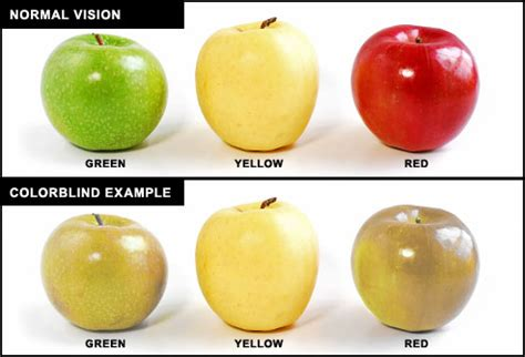 what does color blindness look like what is color blindness zoomax