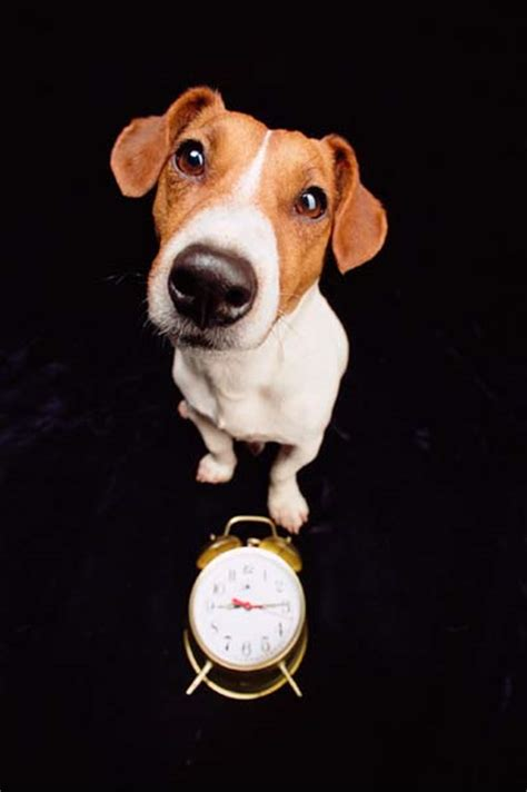 do dogs a concept of time can animals learn and plan without a concept of time can animals learn and plan