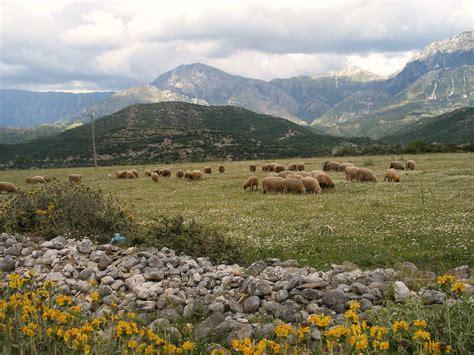 in albania albania familypedia