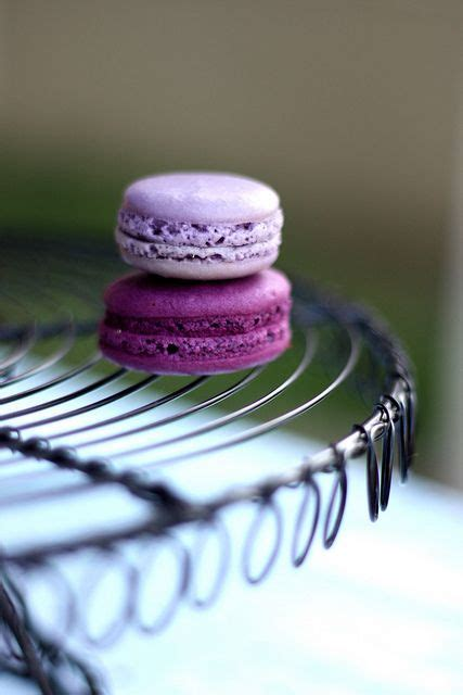 color purple quotes you and me must never part lilacs purple and macaroons on