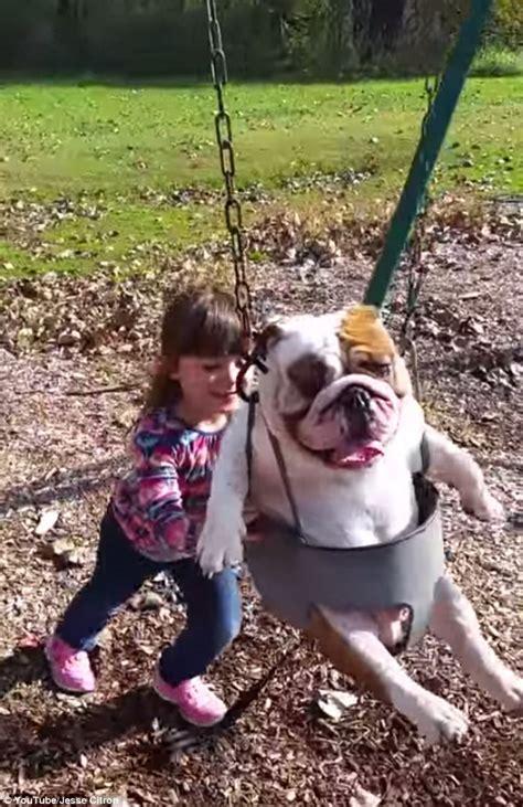 moms swing hilarious video of english bulldog being pushed in a