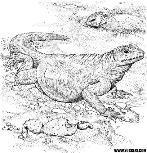 coloring pictures of komodo dragons komodo dragon coloring page by yuckles
