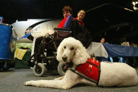 places that service dogs stop using your pet as a service