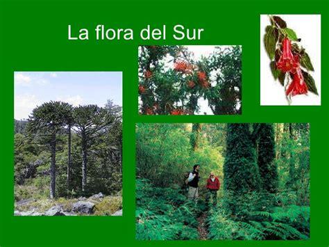 fauna de la zona sur chile en imagenes zona sur