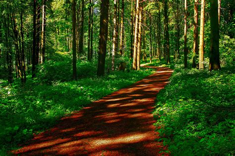 imagenes para pc naturaleza fondos de pantalla bosques carreteras hierba 225 rboles