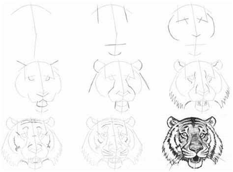 25 unique tiger drawing ideas on pinterest jungle