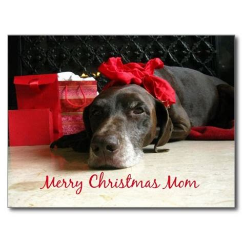 dog wished moms  merry christmas pictures   images  facebook tumblr pinterest