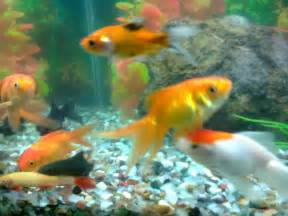 Aquarium Shop in Ahmedabad: For Listing here : Email