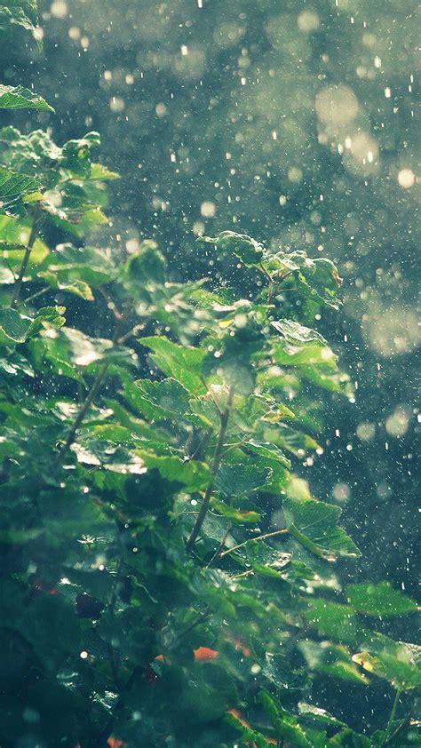 ma raining summer sunny flower nature papersco