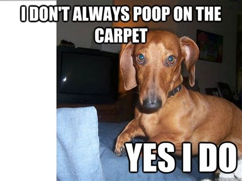 Weiner Dog Meme - best 25 dachshund meme ideas on pinterest funny puppies