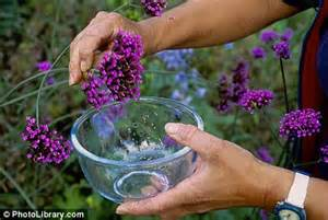 Flowers Seeds Online - reap what you sow collecting ripe seeds from plants can