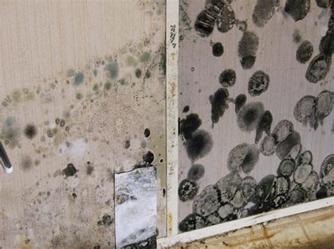 mold in bathroom health symptoms gorgeous 25 black mold on walls design inspiration of how