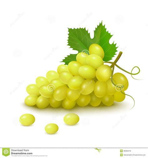 clipart uva mazzo di uva illustrazione vettoriale