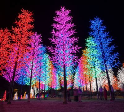 multi colored christmas tree lights