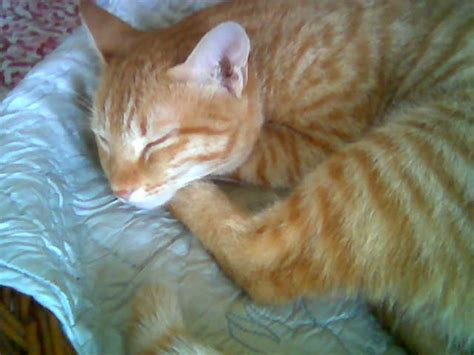 inidia cat 27 show us a picture of your pet india travel forum