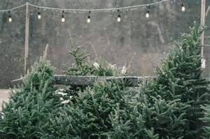 shopper s diary a christmas tree farm in maine gardenista